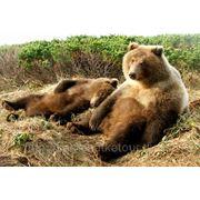 Комбинированный тур «В край вулканов и бурых медведей» фото