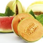 Дыни и арбузы, тыквы, ягоды, сладкие бахчевые культуры. фото