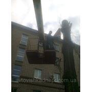 Спил деревьев в Днепропетровске фото