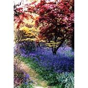 Посадка хвойных и лиственных деревьев фото