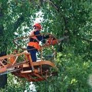 Вырубка деревьев фото