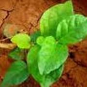 Торф для улучшения почвы фото