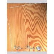 Книга амбарная А4, твердый переплет, ламинированный, 80 листов офсет, линия фото