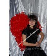 Костюм Черный Ангел с красными крыльями на Hallowееn фото