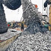 Переработка рыбы, переработка фото