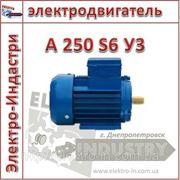 Электродвигатель А 250 S6 У3 фото