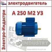 Электродвигатель А 250 М2 У3 фото