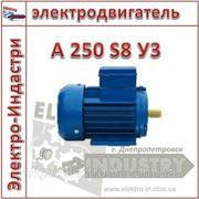 Электродвигатель А 250 S8 У3 фото