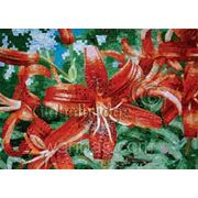Рисунок из Китайской мозаики фото