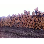 Пиловочное бревно (сорт 1-2) пиловочник, лес кругляк