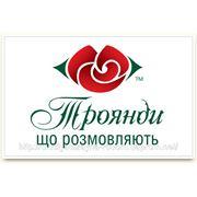 Логотип, разработка, создание векторного логотипа для рекламы фото