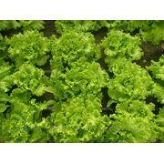 Зеленые салаты фото