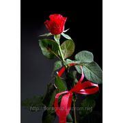 Доставка цветов по Харькову, доставка букетов роз фото