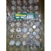 Контейнер для перепелиных яиц на (20) ячеек по 3,50 шт фото