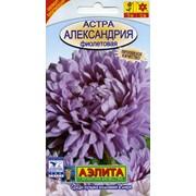 Семена цветов Астра Александрия фиолетовая фото