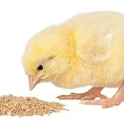 Комбикорм для суточных цыплят Предстарт 0-10дн. фото