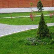 Озеленение в Казахстане фото