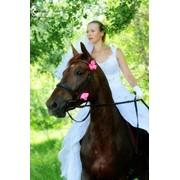 Фотосессии с лошадьми и пони фото