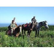 Прогулки на лошадях и квадроциклах дайвинг фото