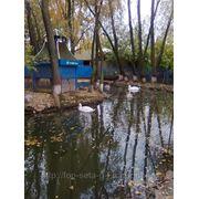 Детские экскурсии Мена «Зоопарк» фото