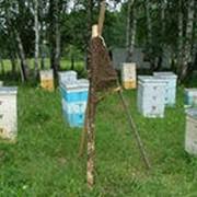 Перевозка пчёл на медосбор, кочёвка фото