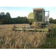 Сельхозпредприятия России база данных фото