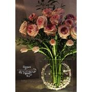 Розы Дэвид Остин сорт Кейра фото