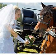 Катание на лошадях на свадьбе фотография