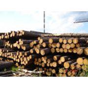 Закупка лесоматериалов балансов щепы тех. дрова фото