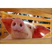Корма комбикорма кормовые концентраты премиксы фураж для животных фото