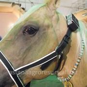 Спутниковый портативный GPS-трекер ошейник для КРС, Лошадей, Верблюдов, Овец фото