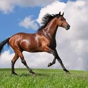 Витамины для лошадей Лактобифадол фото
