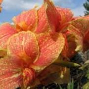 Композиции из французских декоративных растений фото