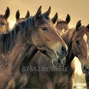 Комбикорм КК-73 для откорма лошадей фото