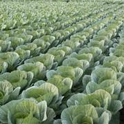 Продукция растениеводства фото