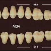 Частичный гарнитур 8шт. Жевательные верхние A4 M34 фото