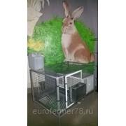 Клетка каркасная для кроликов с маточником ККМ 1-1 ЕвроФермер78 фото