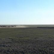 Ветронасосы для животноводства фото