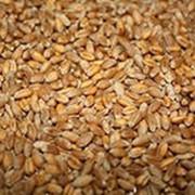 Пшеница 4 класс, ГОСТ