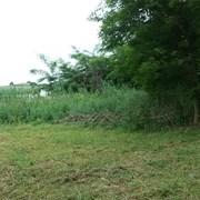 Покос травы фото