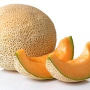 Семена дыня Лада 1 кг фото