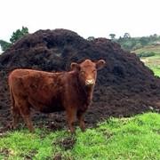 Навоз коровий в мешках по 50 л. фото