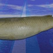 Пеленгас- мороженая рыба фото