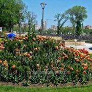 Устройство цветников и клумб №44 фото
