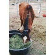 Кормление лошадей фотография