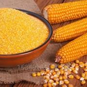 Кукурузная крупа №4, №5, №6, Кукурузная крупа для изготовления кукурузных палочек фото