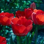 Фотокартина Цветок в камнях фото