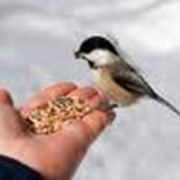 Корм сухой для птиц