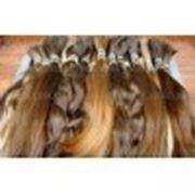 Славянские волосы 45 см. Продажа и наращивание. фото
