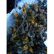 Висушений цвіт топінамбура фото